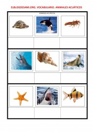 ELBLOGDESAMI.ORG-VOCABULARIO-ANIMALES-ACUATICOS-(1)-001