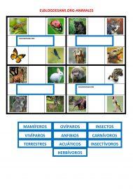 ELBLOGDESAMI.ORG-ANIMALES-2-0012