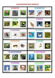 ELBLOGDESAMI.ORG-ANIMALES1-001